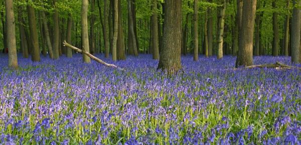 Dockey Wood by mark2uk