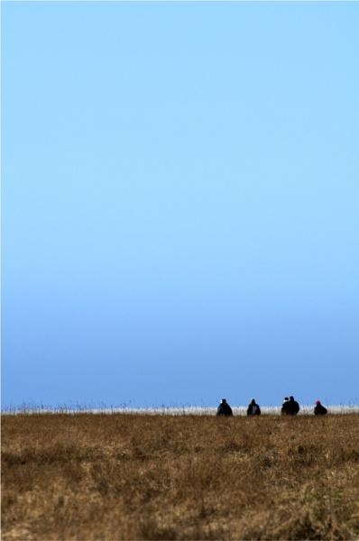 Salt Marsh by woolybill1