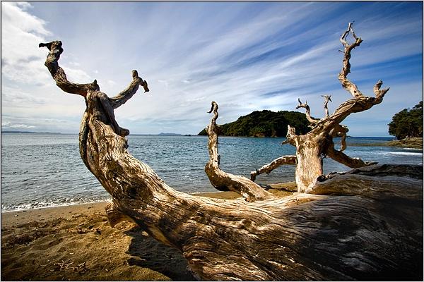 Goat Island by kalseru