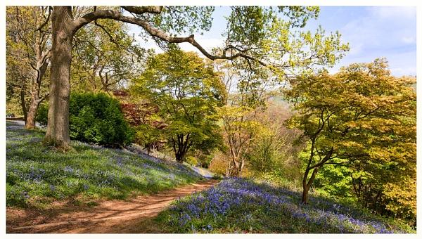 Winkworth arboretum by BobA