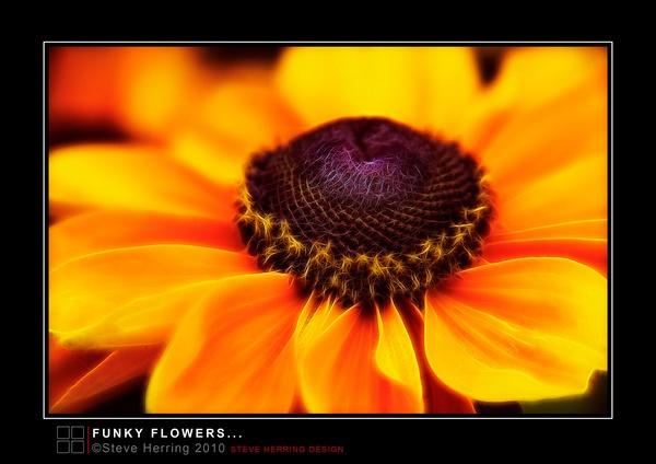 Funky Flower. by sherring