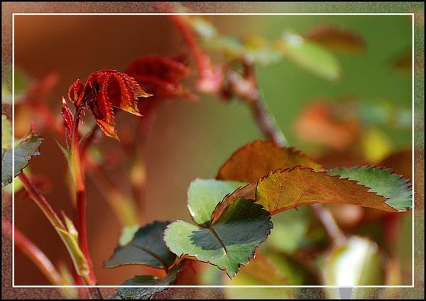 Rose leaves by peel3081