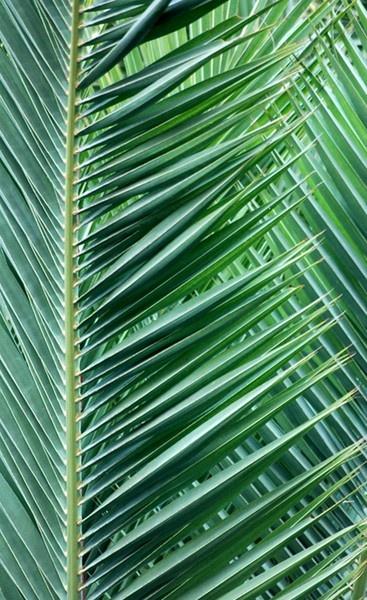 Ferns by geoffmilner