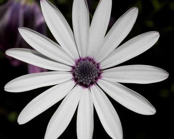 Flower by foz