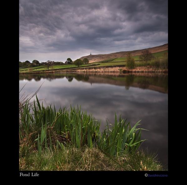 Pond Life by Tandberg