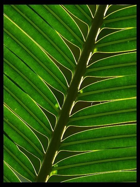 Palm leaf by Beanie76