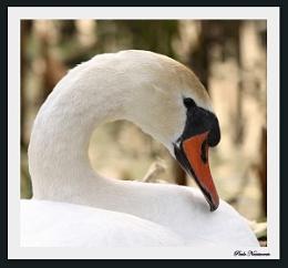 Ms Swan!