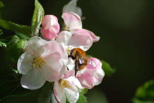 Busy Bee by Bearspirit29