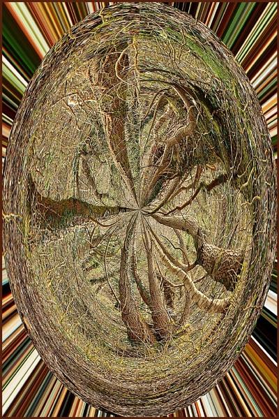 Wildwood Weave by rockfish