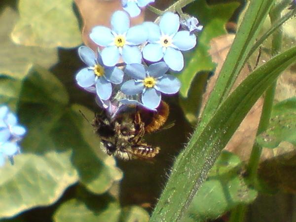 Bees by MGathercole