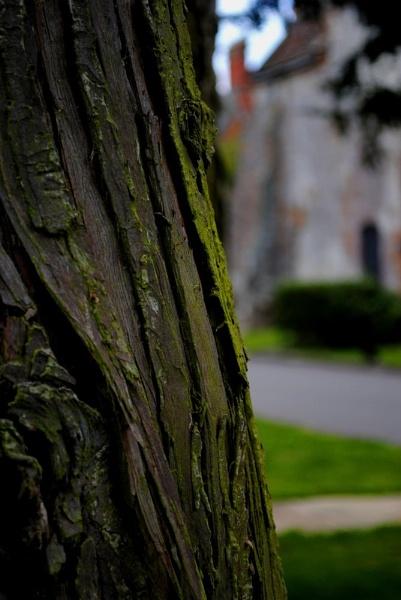 barking up the wrong tree by magicman