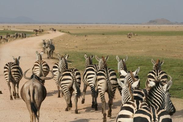 Zebra Crossing by Scooby10