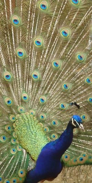 Bird of beauty by catherinekp79