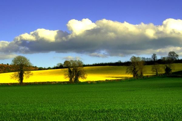 The Fields of Ballyragget by Beladd