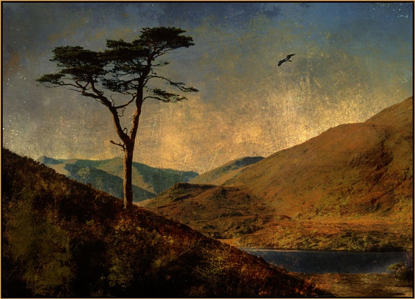 Affric Pine by MalcolmM