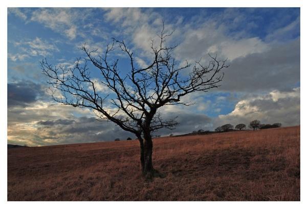 Twilight Mishapes. by Buffalo_Tom