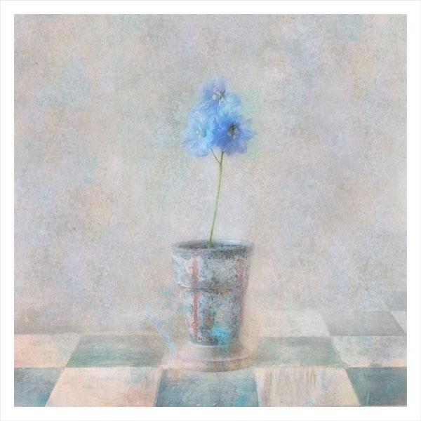 blue by StevenLePrevost