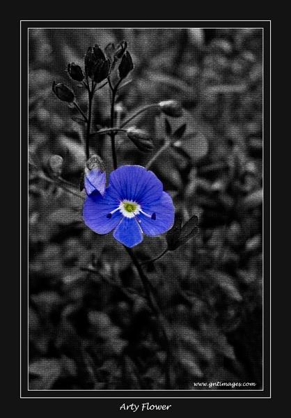 Arty Flower by GlynnisFrith