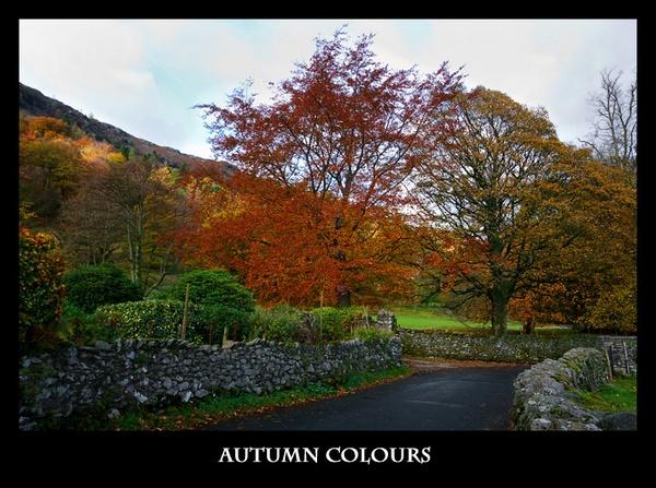 Autumn Colours by cabbie
