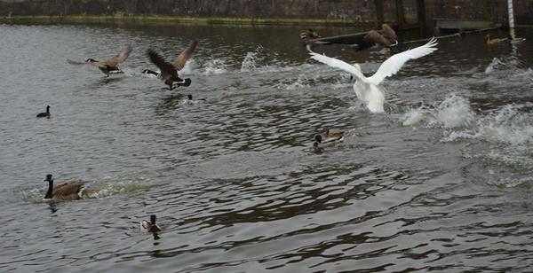 Swanupmanship by Bowline
