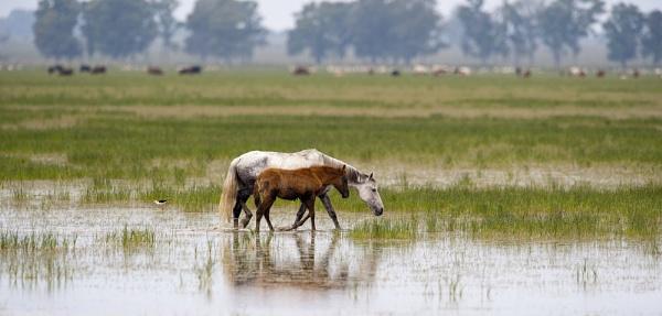 Horses by averity