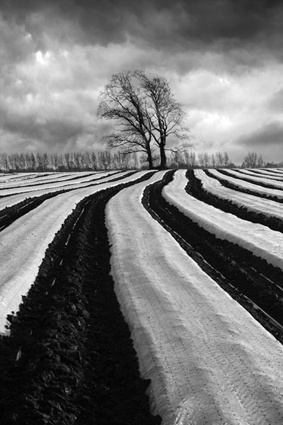 Lines by photospec