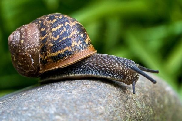 Snail by jonrayner