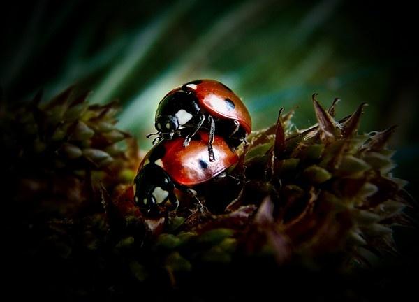 love bug by tony147