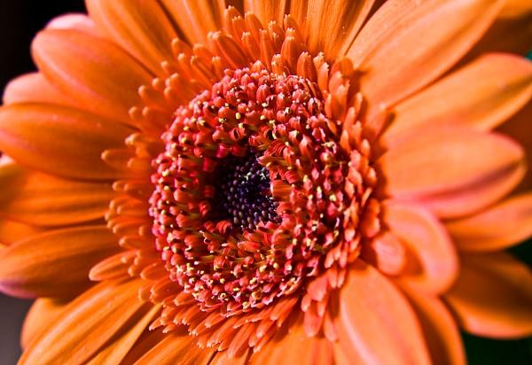 red flower by ashminder
