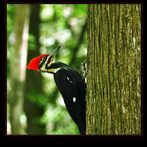 The Woodpecker by PeelNStick
