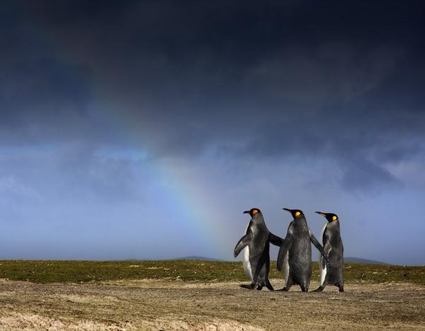 Admiring the rainbow by Skinnyde