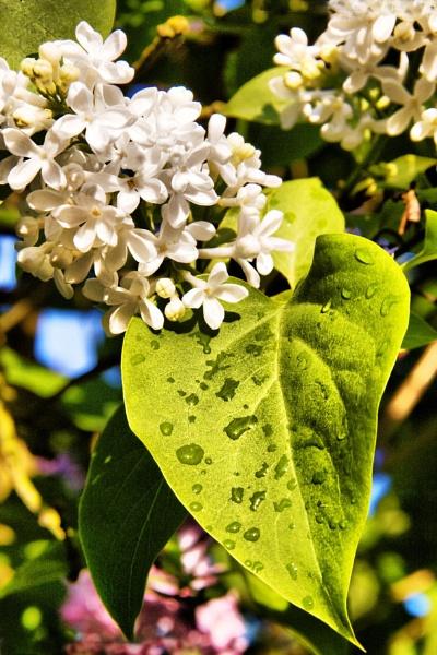 Morning Dew by Radders3107