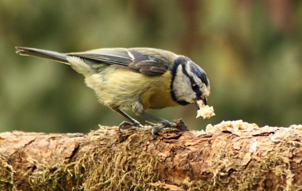 Feeding More Than One by OliPackwood