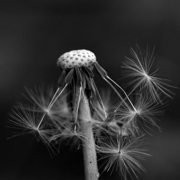 Blowing in the wind by wattley
