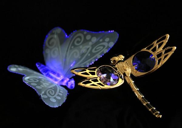 Butterfly meets dragon by wattley