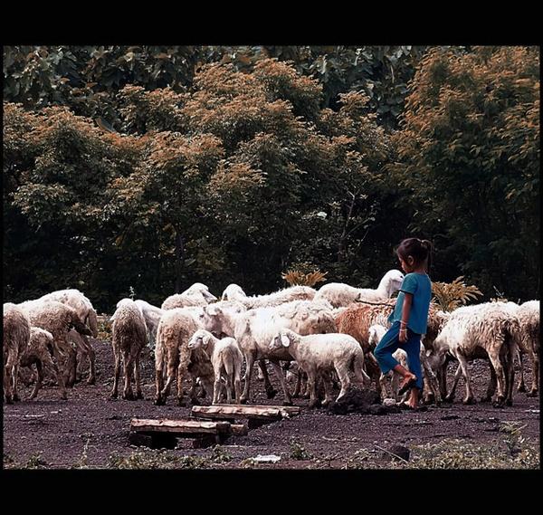 Lill shepherd by widjaba