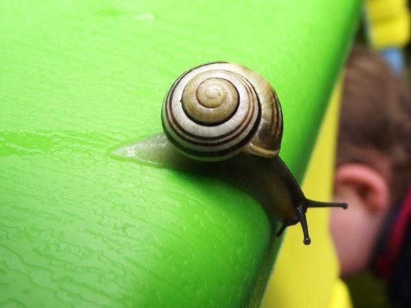 Snail by Wakkierob
