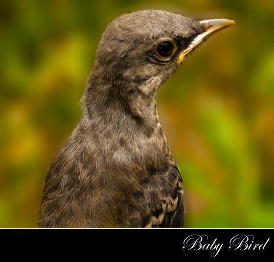 Baby Bird by PeelNStick