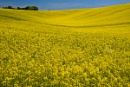 Duncton Down In Spring by JJGEE