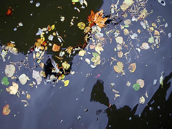 Fallen leaves by kombizz
