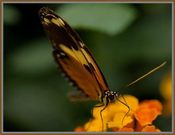 """Flutterby\"""" by sparklep"""