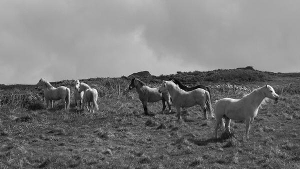 wild horses by sheepdogshady