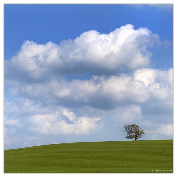 Green, Green Grass by brianquinn