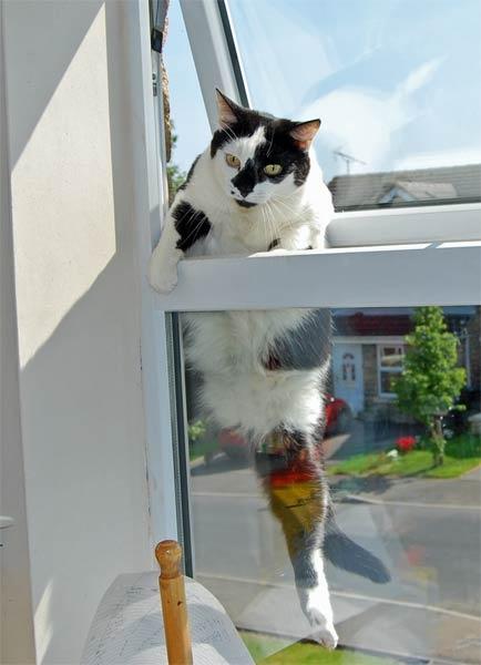 Cat burglar by Gwen_A