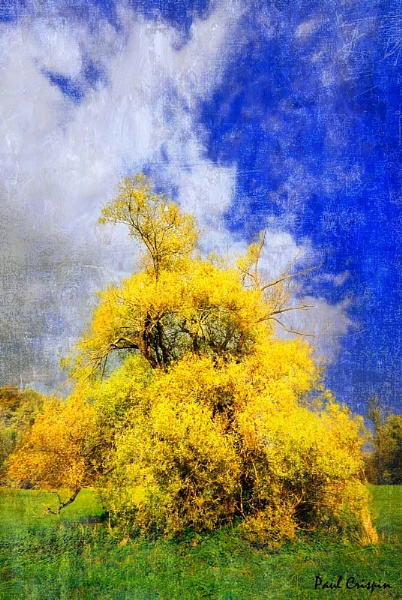 The Yellow Tree by ducatirider