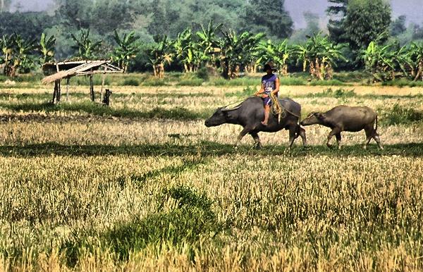 Farmlife by photophantom