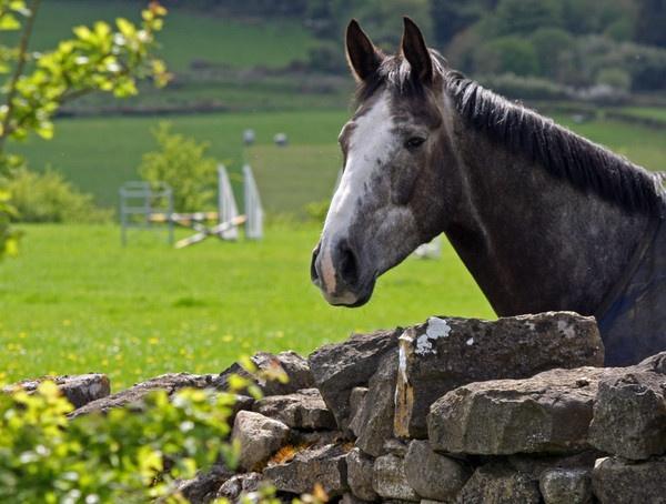 Irish Hill Top Horse by rowejay
