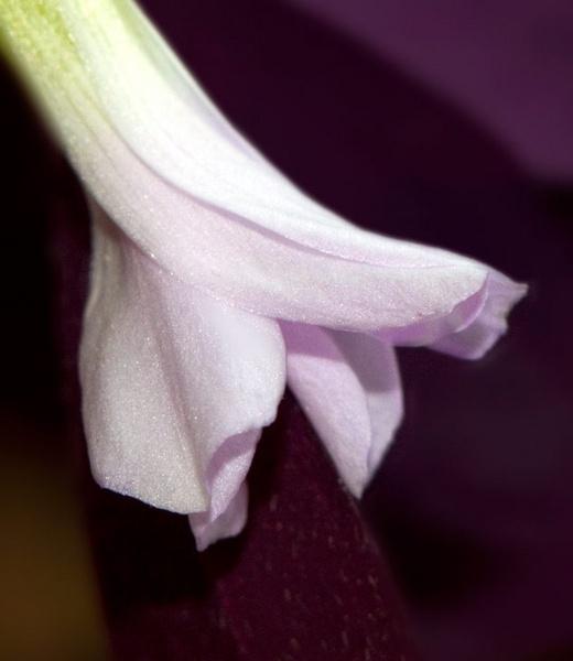 Small Succulent by HuntedDragon