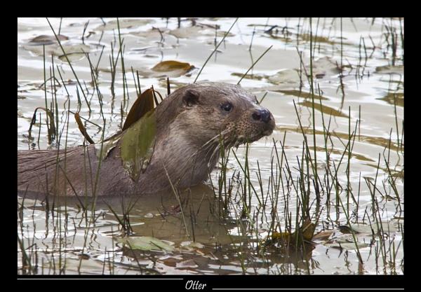 Otter Tales by SteveMoulding