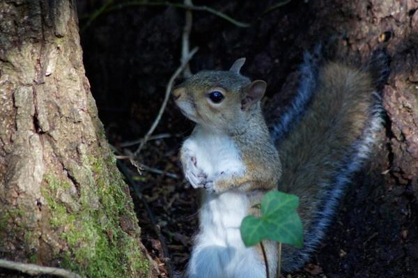 close up squirrel by alianar